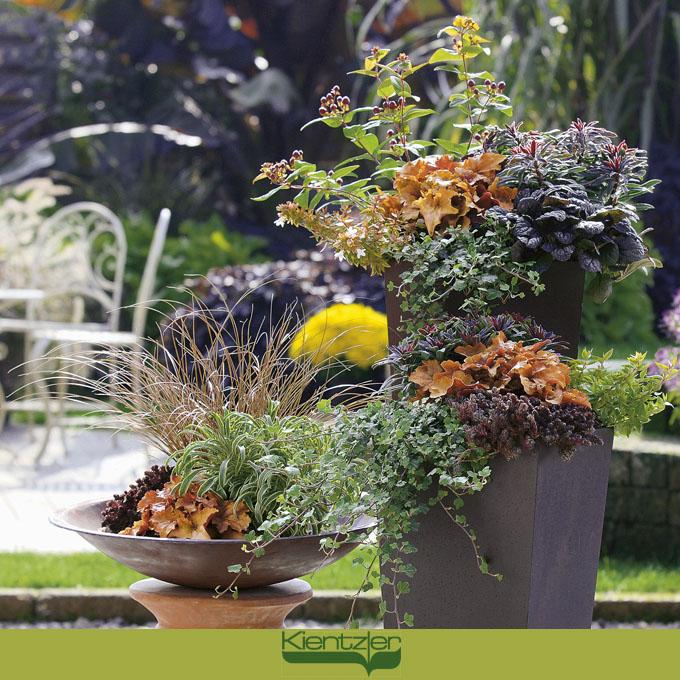 zauberhafte Pflanzideen für Balkon, Terrasse und Garten